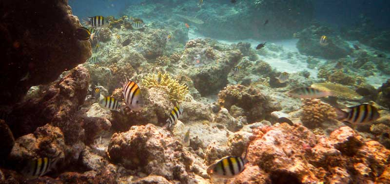underwater-beauty-island-kalimantan-justgoindonesia-indonesia-travel-maratua-2