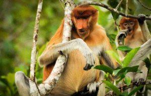 tanjung-puting-kalimantan-borneo-national-park-orangutan-10