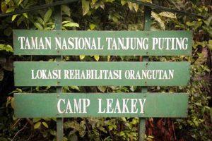 tanjung-puting-kalimantan-borneo-national-park-orangutan-4