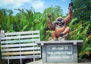 tanjung-puting-kalimantan-borneo-national-park-orangutan-9