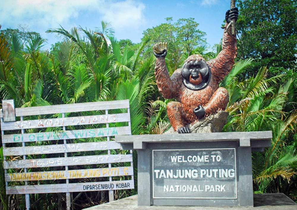 "tanjung puting national park Fnpf has been working in kalimantan, borneo since 1997we have projects in and around tanjung puting national park and lamandau river wildlife reserve in line with fnpf's approach of ""wildlife, habitat and community"", our projects encompass."
