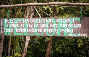 tanjung-puting-kalimantan-borneo-national-park-orangutan2