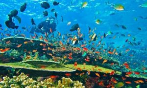 Bunaken-is-famous-for-its-spectacular-marine-life-and-coral-reefs justgoindonesia indonesia travel