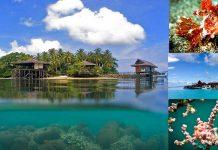 underwater-beauty-island-kalimantan-justgoindonesia-indonesia-travel-maratua
