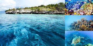 best-diving-spot-bali-indonesia-travel-justgoindonesia-